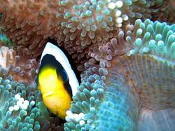 maldiv3