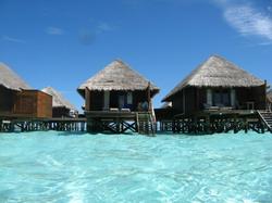 maldiv8